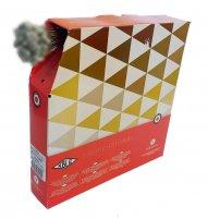 CABLE DERAILLEUR INOX TRANSFIL (Boite de 100) KBLE KPX121902